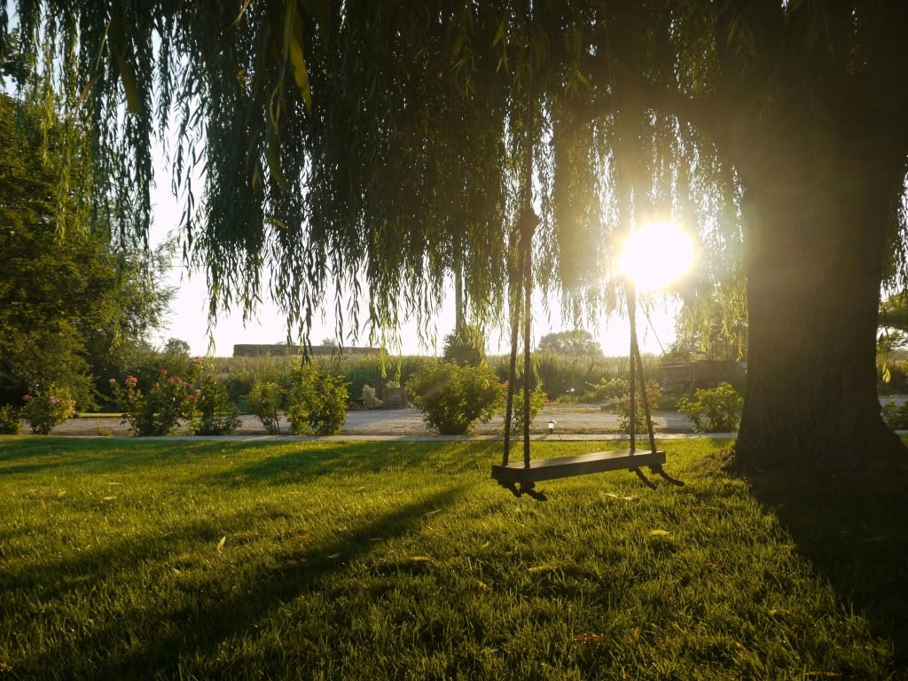 A Swing Hanging From A Tree As the Sun Sets.